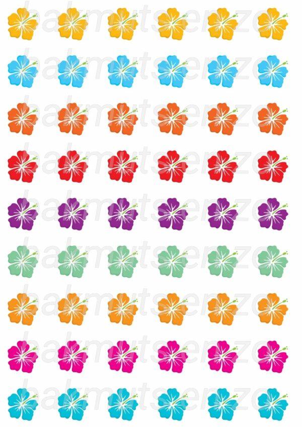 bloem-hibiscus.jpg